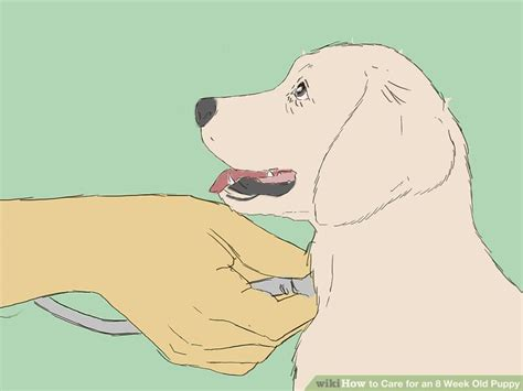 how often should puppies be dewormed how to care for an 8 week puppy with pictures wikihow