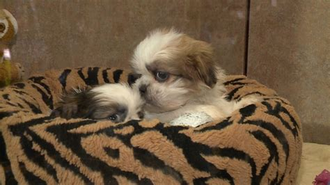 should pet stores be banned from selling pets ctv