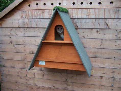 owl boxes golden brown barn owl box the owl box