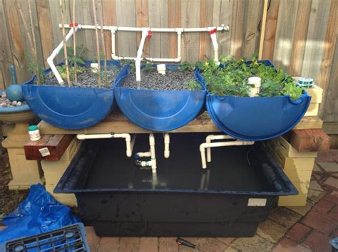 backyard aquaponics system design diy aquaponics system design
