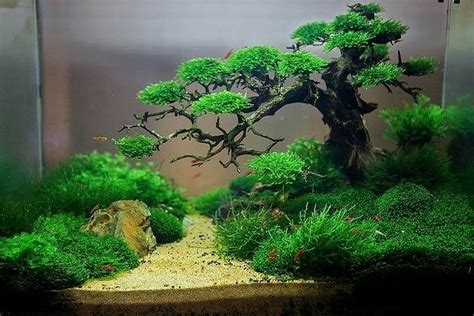 japanese aquascape underwater bonsai by trung kala awesome aquascapes