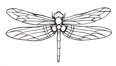 dragonfly outline www imgkid com the image kid has it