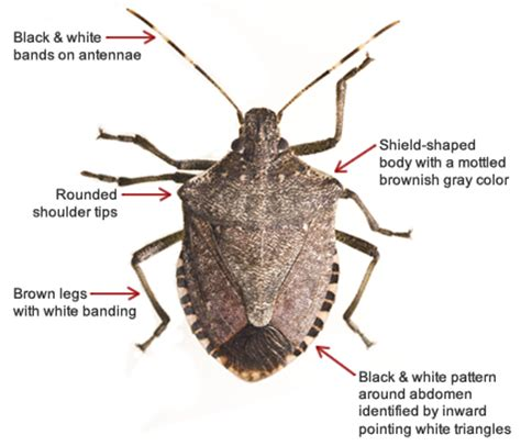 Name A Bug To Find In Their House The Rocking