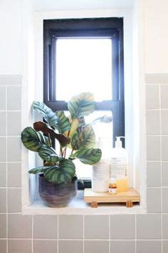 best plant for bathroom with no window window sill if window located within the shower stall