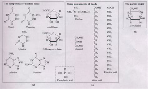 carbohydrates subunit chapter 3 biomolecules