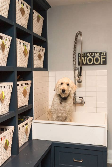 outstanding dog shower ideas pet washing stations home