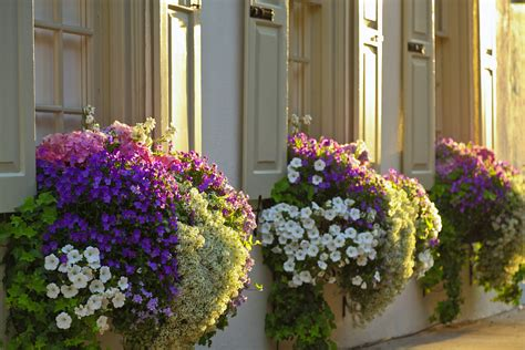 window flower box design who plants a seed window boxes