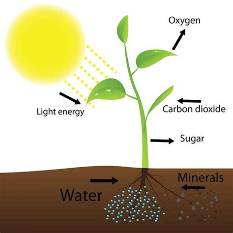 light and plant growth how light affects plant growth what you need to