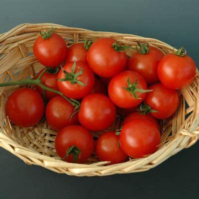 tomato baby cakes  harris seeds