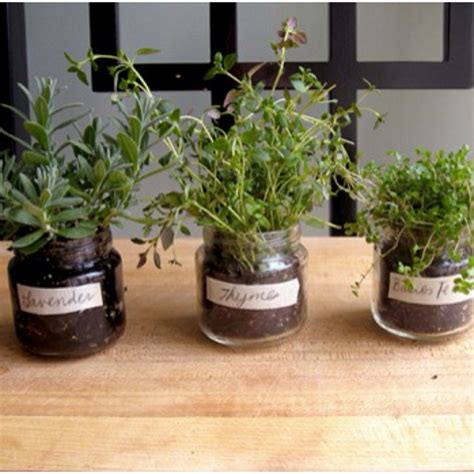 indoor spice garden indoor herb garden outside pinterest
