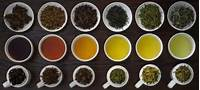 Types Of Tea What Does It All Mean  World Infusers