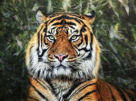Image Gallery tigris