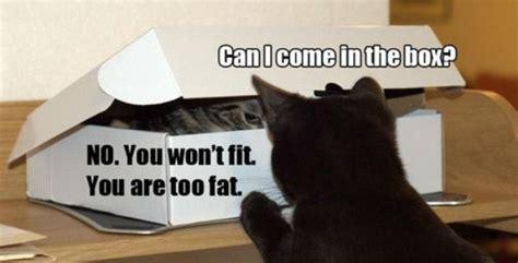 meme box can i come in the box cat meme cat planet cat planet