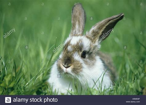 le hase hase tier tiere haustier haustiere animal animals domestic
