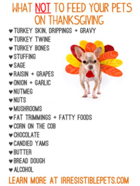 foods not to give dogs responsible pet ownership archives myphillypetcare
