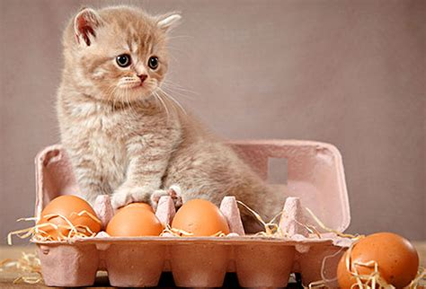 how to live like your cat books foods your cat can eat pictures