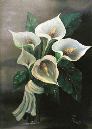 fiore la calla enrica signora g la calla fiore significato