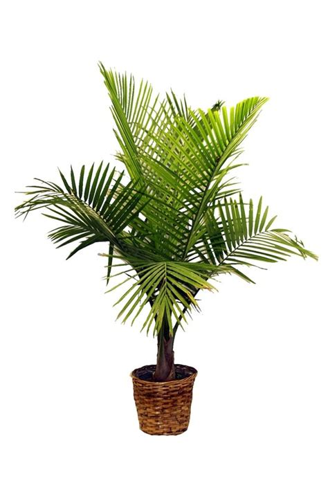 exotic house plants exotic house plants images house image
