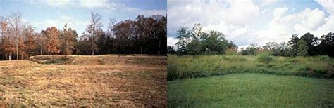 Landscape Rehabilitation Definition Rehabilitating Vegetation Cultural Landscape Guidelines