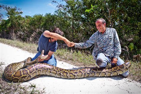 hunters capture a 15 foot burmese python
