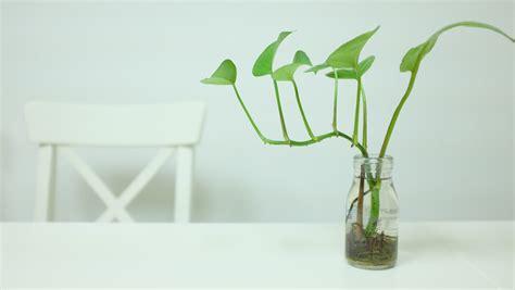 Vas Bunga Pot Bunga Tanaman Hijau Kotak Hitam gambar menanam kaca vas hijau botol penerangan