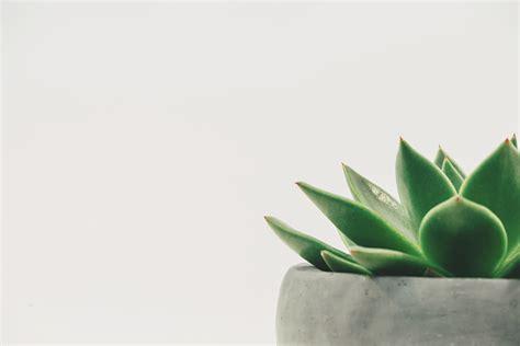 minimalist plants free images nature leaf flower green
