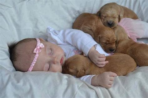 puppy sleeping with baby babies and puppies on flipboard