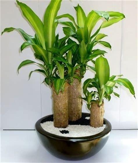 17 best images about plantas on pinterest los gatos 17 mejores ideas sobre plantas de interior en pinterest