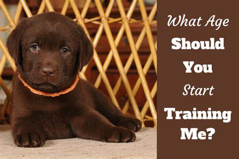 start training  puppy  age