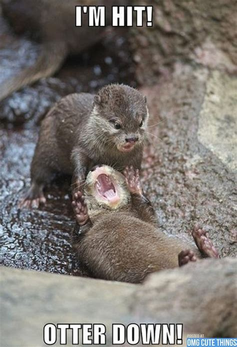 Cute Baby Animal Memes - cute baby animals with gun animal memes omg cute things