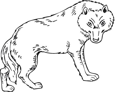 wolf coloring pages pdf 12 wolf coloring pages print color craft