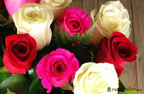 imagenes rojas y amarillas ramo de rosas rojas rosas y blancas en regalador com