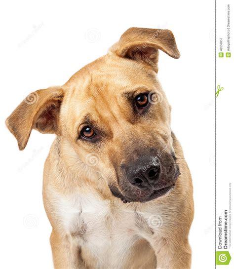 puppy primer primer lindo perro de la mezcla boxeador foto de