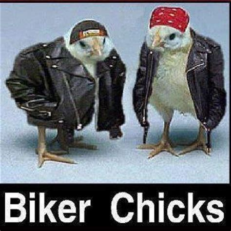 Biker Chick Meme - biker chicks meme slapcaption com meme pinterest