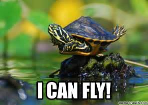 Turtle Meme - flying turtle
