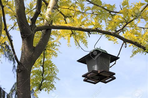 Hanging Bird Feeders From Trees hanging bird feeder from tree birdcage design ideas
