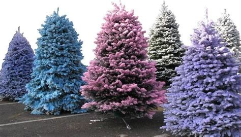 flocked christmas trees christmas pinterest