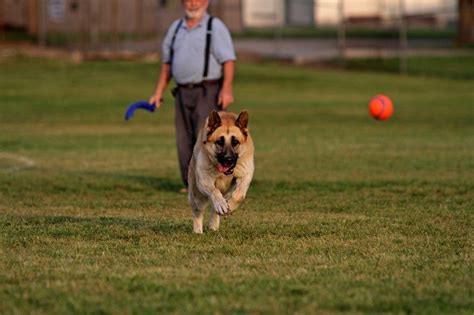 how to your to fetch a how to teach a to fetch an exercise in loyalty and playfulness