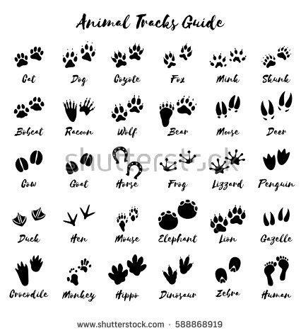 printable animal feet vector bear track vector free engine image for user