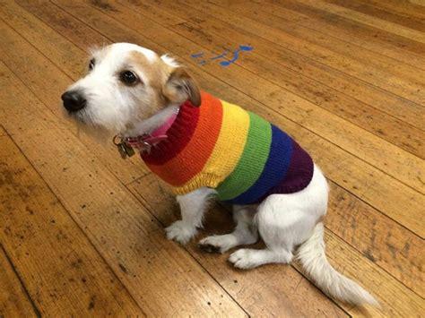 knitting patterns for dog coats australia meet the maker our dog onesie designer makerist