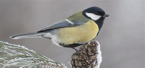 prendre soin des oiseaux pendant l hiver