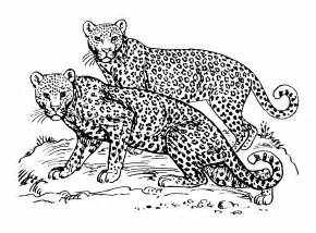 jaguar coloring pages jaguar coloring pages for adults coloring pages