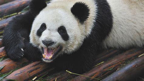 www panda how panda 4 1 should change your content strategy