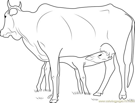 coloring pages of cow and calf cow feeding calf coloring page free cow coloring pages