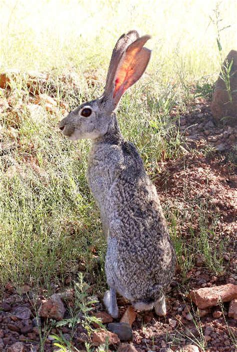 mammals  arizona  focus  nature tours