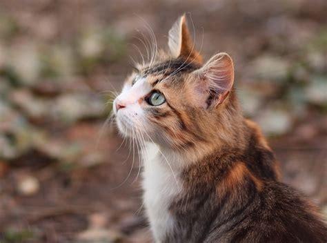 lettiere gatto lettiere per gatti tutto quello c 232 da sapere dogalize