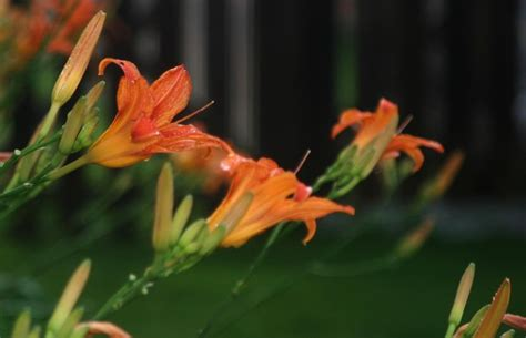 17 best images about flower night rain on pinterest