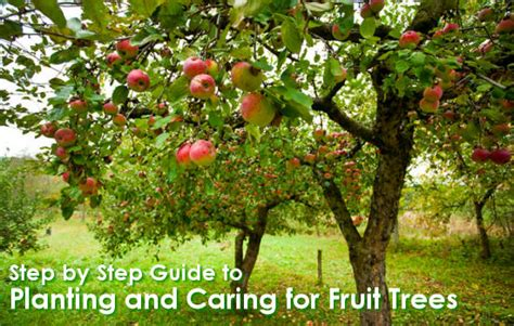 fruit tree planting guide step by step guide to planting and caring for fruit trees