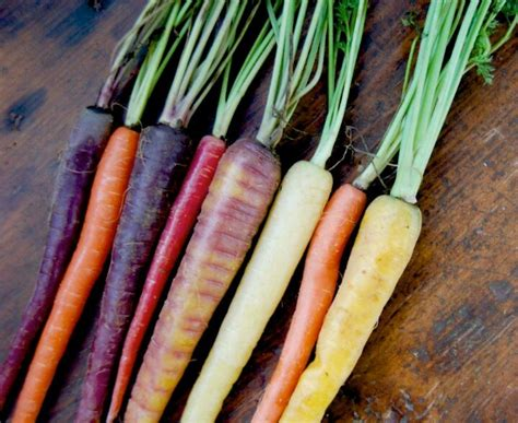 colorful carrots colorful carrots food