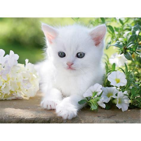 wallpaper chat mignon chaton blanc 1500 teile ravensburger puzzle acheter en
